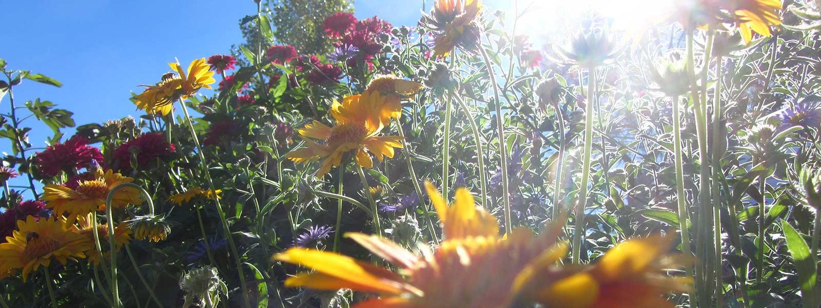 Sunlight filtered through flowers